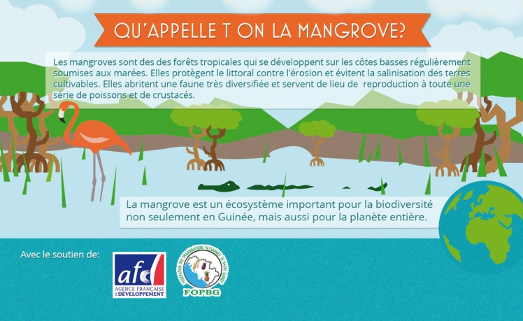 quapelle-t-on-la-mangrove